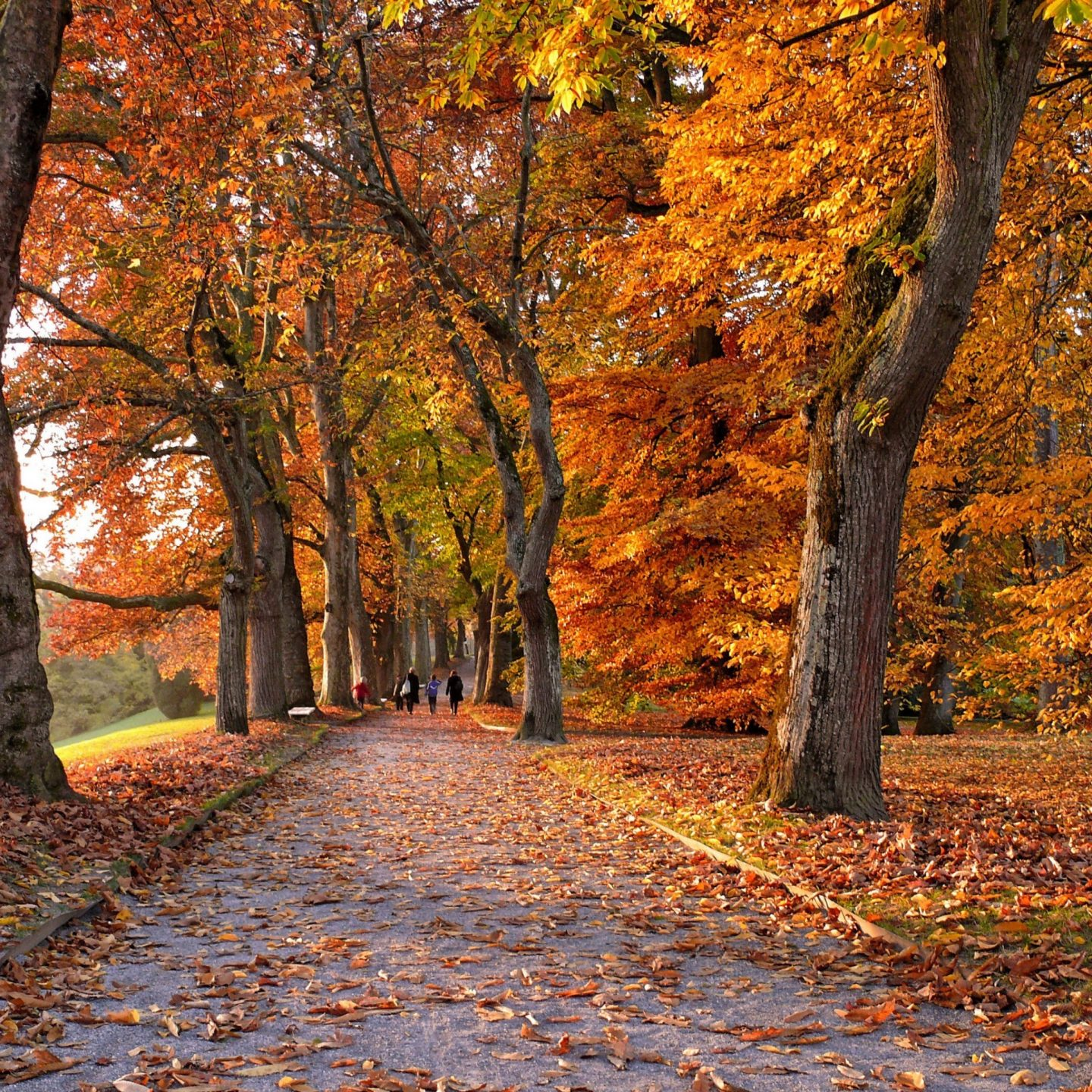 5 Outdoor Activities To Enjoy In Autumn